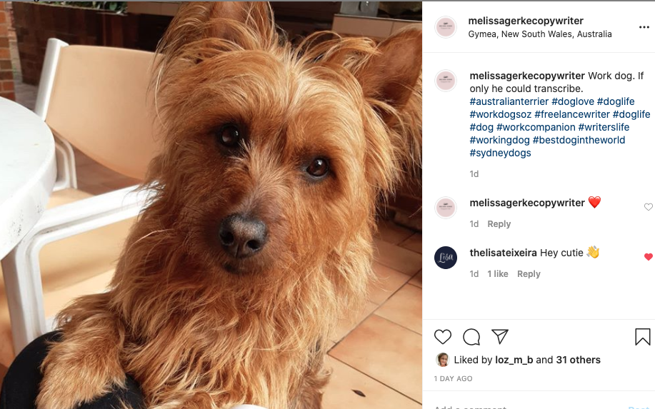Dog on instagram